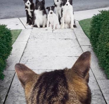 garde-chien-chat