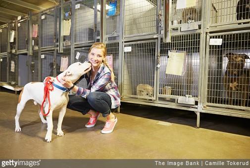 Pour Quelles Raisons Adopter Un Animal En Refuge