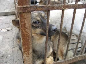 Témoin d'une maltraitance animale, réagissez !