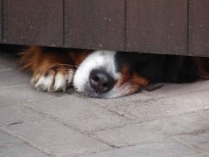Intoxication des animaux domestiques, les précautions à prendre