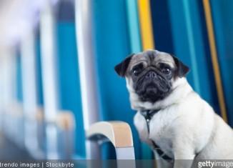 voyage chien en train