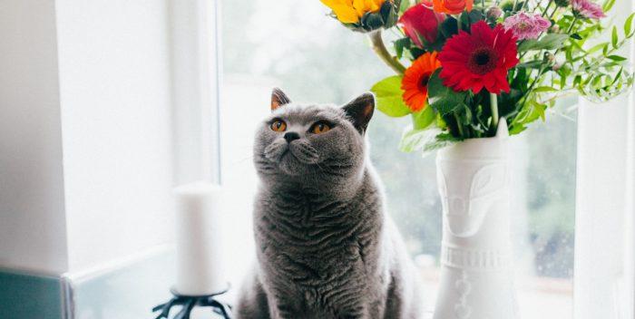 Chat assis à côté d'un pot de fleurs