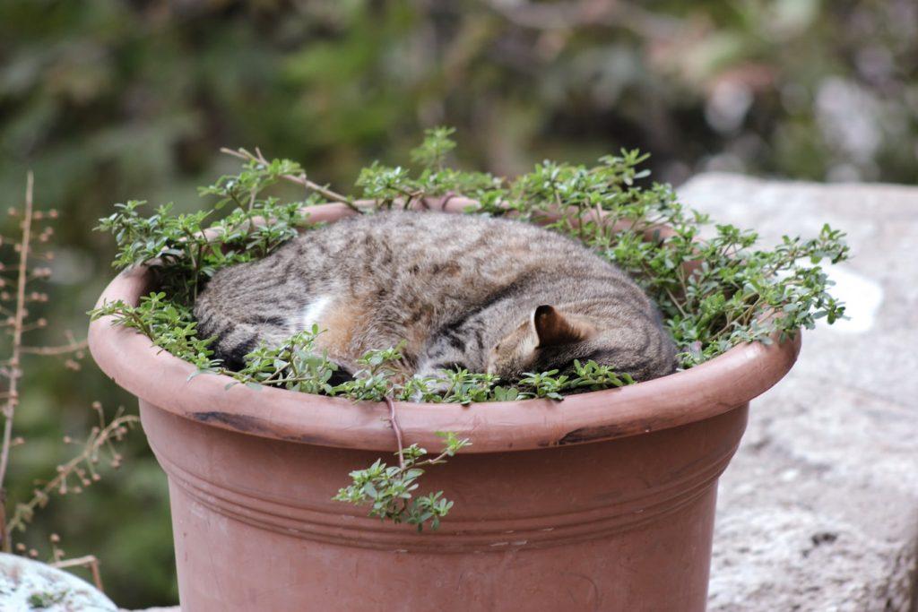 Chat qui dort dans le pot d'une plante