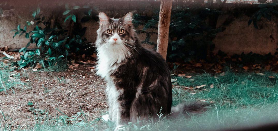 Chat à l'extérieur dans son enclos